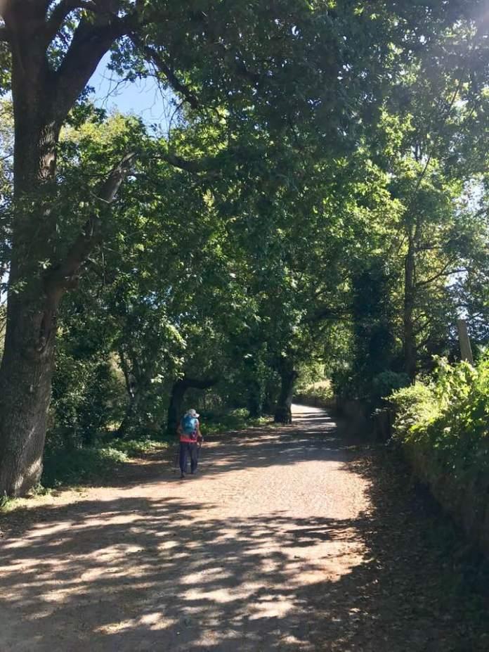 tree-lane_ponte