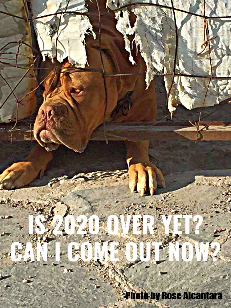 sad-dog-edited-1.jpg